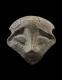 Neolithic Idol Head